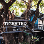 Tiger TED's Cafe Chiang Mai