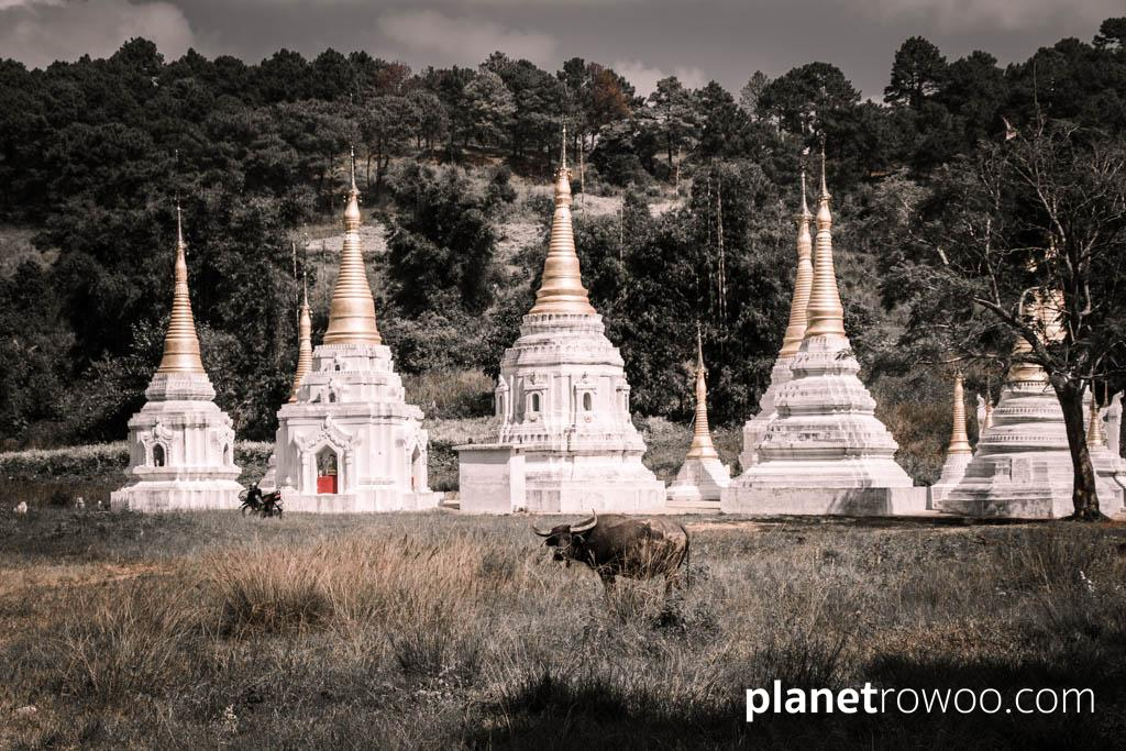 Water buffalo and pagodas in the Kalaw hills