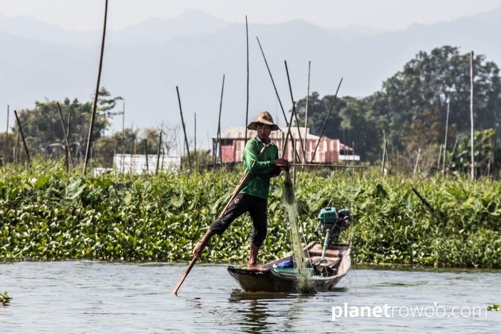 Fishing by floating gardens, Inle Lake