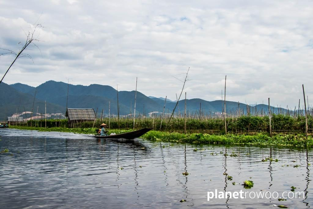 A motorboat glides past an Inle Lake floating farm