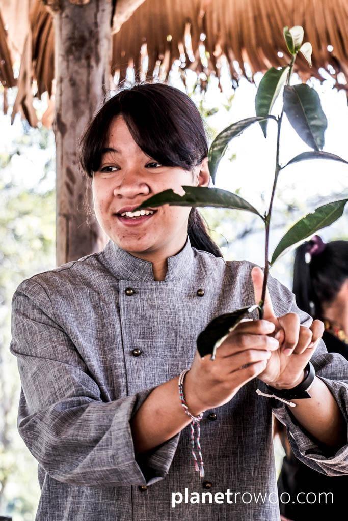 Learning about the tea plant at the Araksa Tea Garden